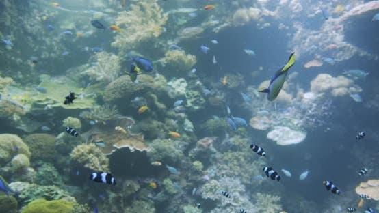 Thumbnail for Unterwasser-bunte tropische Fische. Tropische Unterwasserfische