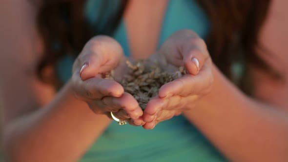 Cover Image for Woman Hands Holding Ears and Grains of Wheat