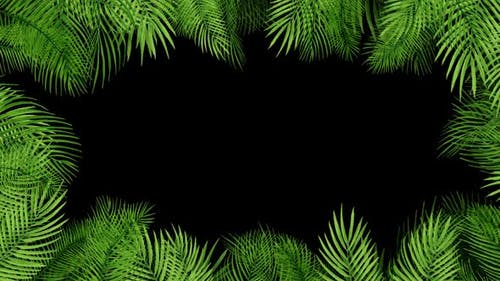 Palm Leaves HD