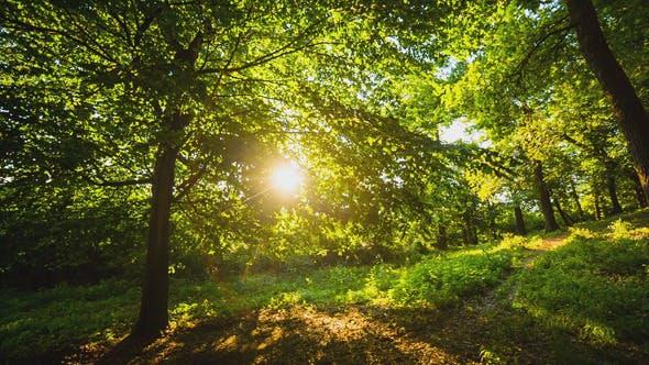 Thumbnail for Sun Through the Leaves