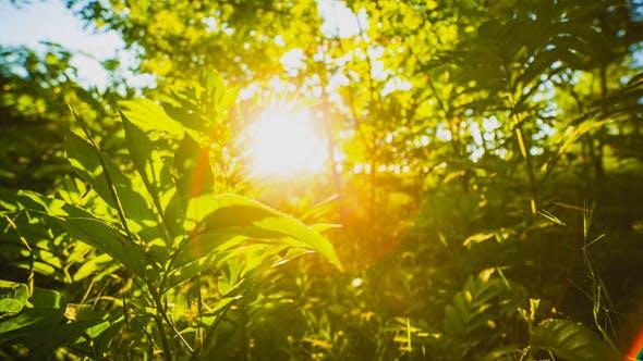Thumbnail for Sun Ray 2