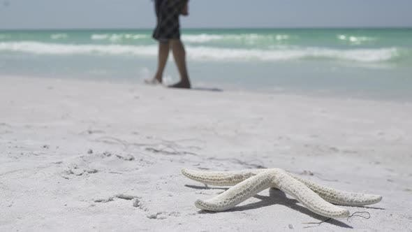 Thumbnail for Starfish On The Beach Of A Resort (1 Of 13)
