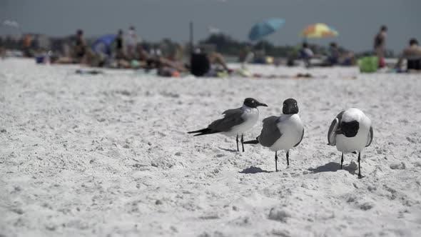 Thumbnail for Birds On A Busy Beach (1 Of 13)
