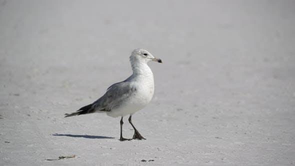 Thumbnail for Birds On A Busy Beach (13 Of 13)