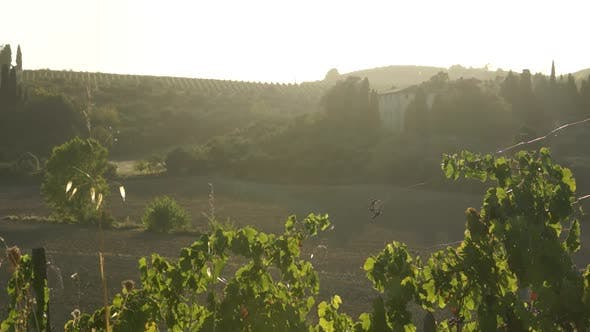 Thumbnail for Views Of A Tuscan Vineyard (1 Of 11)