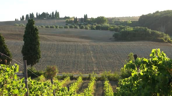 Thumbnail for Views Of A Tuscan Vineyard (2 Of 11)