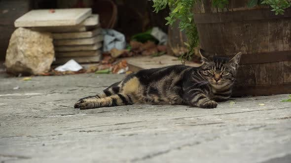 Thumbnail for Italian Cat Resting In An Alley