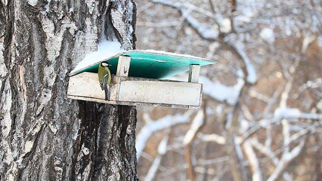 Thumbnail for Bird feeder