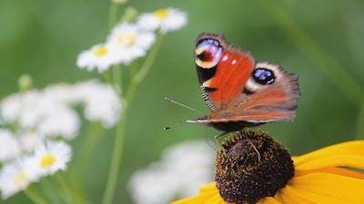 Butterfly on a Flower 4