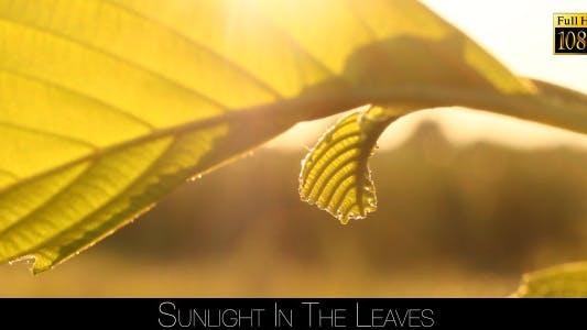 Thumbnail for Sunlight In The Leaves 65