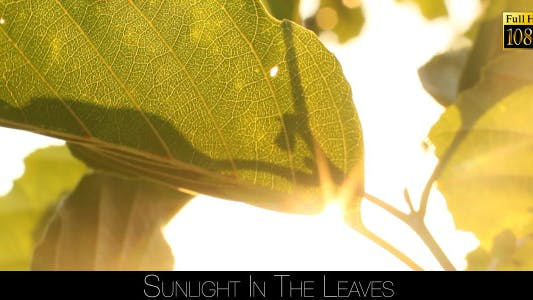Thumbnail for Sunlight In The Leaves 69