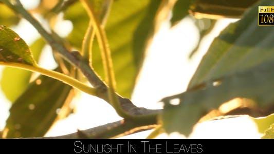 Thumbnail for Sunlight In The Leaves 70