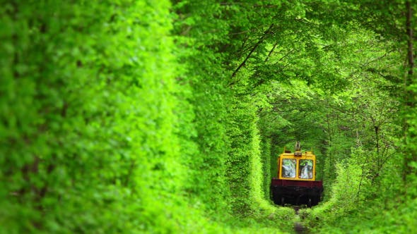 Thumbnail for Technical Train in the Tunnel from Deciduous Trees