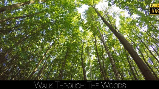 Cover Image for Walk Through The Woods 27