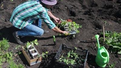Planting Seedlings.