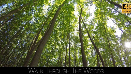 Thumbnail for Walk Through The Woods 25