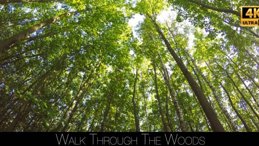 Thumbnail for Walk Through The Woods 27