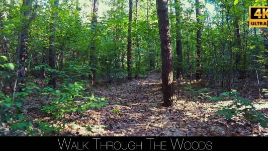 Thumbnail for Walk Through The Woods 28