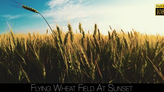 Thumbnail for Flying Wheat Field At Sunset