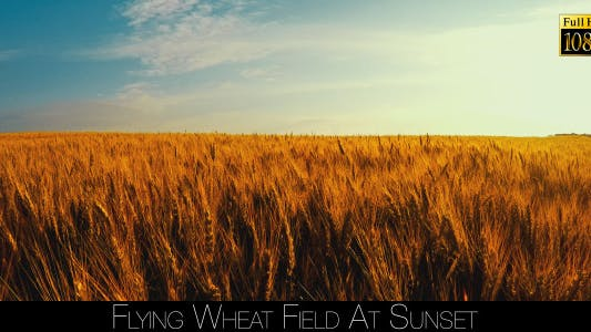 Thumbnail for Flying Wheat Field At Sunset 2
