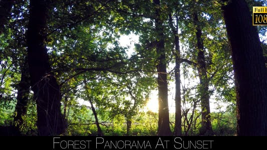Thumbnail for Forest Panorama At Sunset