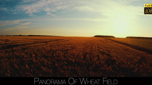 Thumbnail for Panorama Of Wheat Field 3