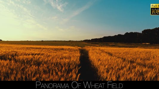 Cover Image for Panorama Of Wheat Field 5