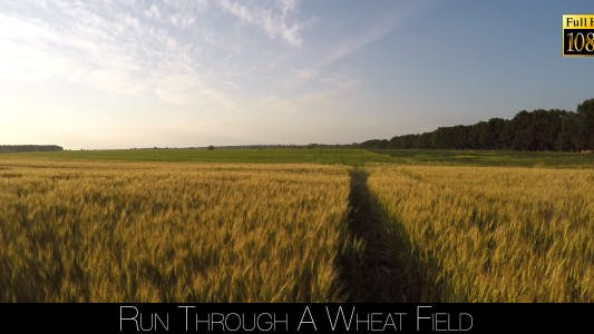 Cover Image for Run Through A Wheat Field