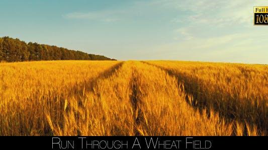 Thumbnail for Run Through A Wheat Field 2