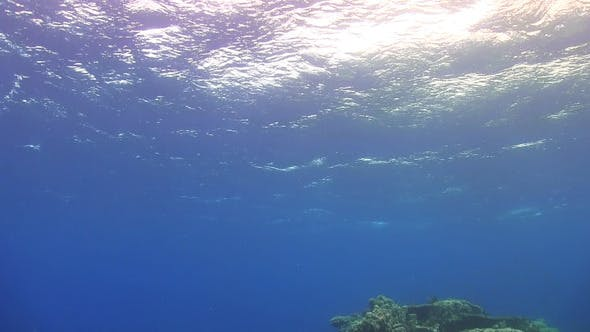 Thumbnail for Waves of Sea Over the Coral Reef
