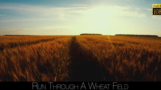 Thumbnail for Run Through A Wheat Field