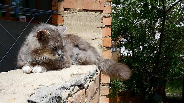 Cover Image for Cat Resting On The Curb