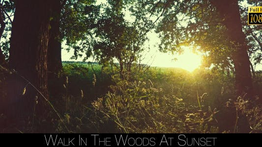 Thumbnail for Walk In The Woods At Sunset