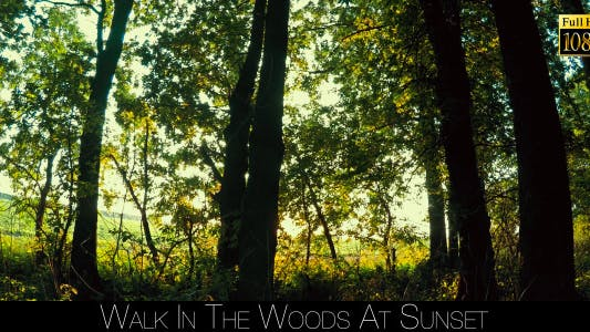 Thumbnail for Walk In The Woods At Sunset 3