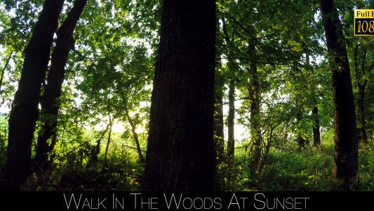 Thumbnail for Walk In The Woods At Sunset 6