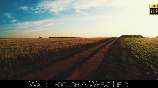 Thumbnail for Walk Through A Wheat Field 2
