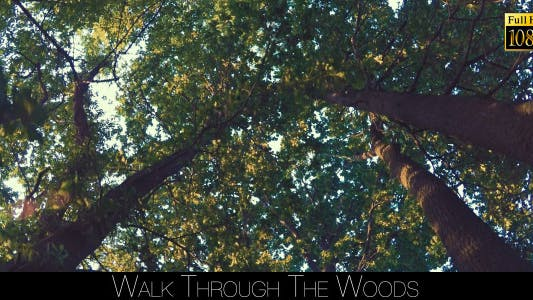 Thumbnail for Walk Through The Woods 20