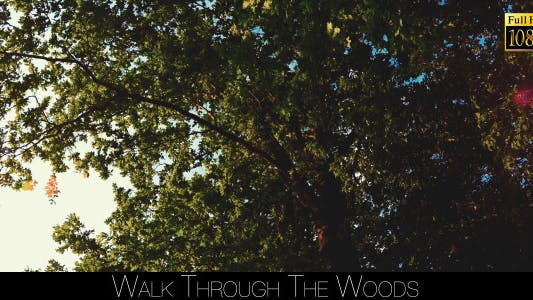 Thumbnail for Walk Through The Woods 22