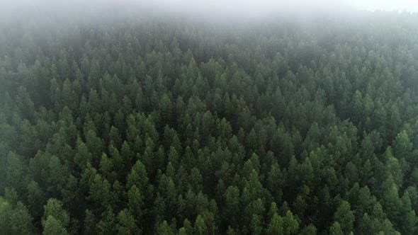 Thumbnail for Forest Aerial