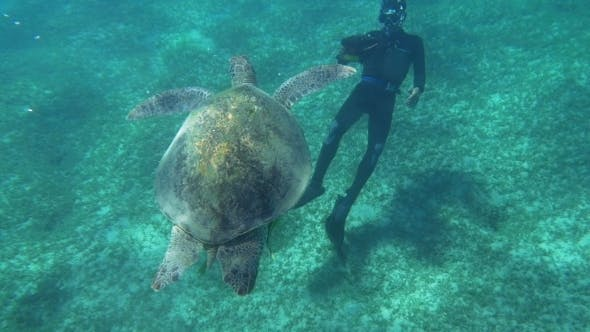 Thumbnail for Diver Shooting a Big Sea Turtle