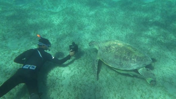 Thumbnail for Shooting Sea Turtle Underwater