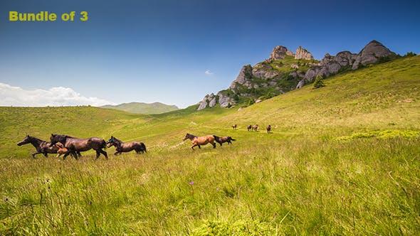 Thumbnail for Horses Through the Mountains