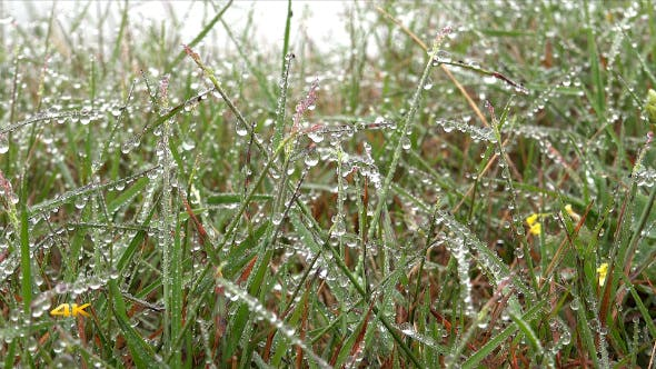 Thumbnail for Dew Drops on Grass with Slider