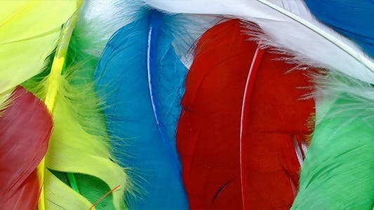 Thumbnail for Colorful Feathers