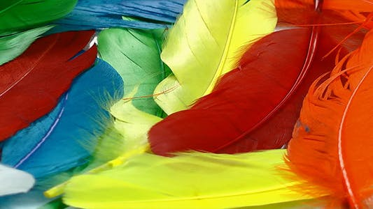 Thumbnail for Colorful Feathers 2