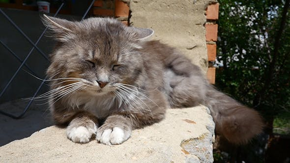 Thumbnail for Cat Resting On The Curb