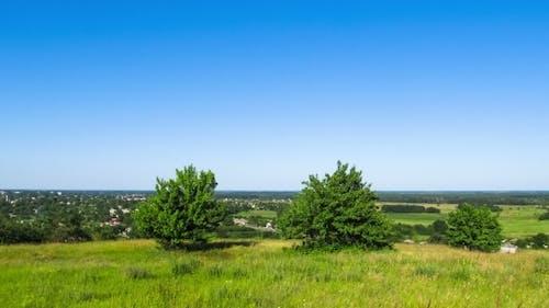 Landscape, Trees High On Top Against a Plain