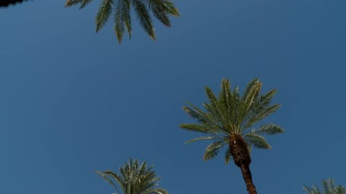 Driving under rows of palm trees