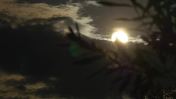 Thumbnail for Contre-jour, Sun Shines Through the Tree Branch,