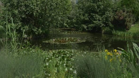 Thumbnail for sumpfigen teich im park, Seerosen